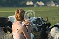 Boerin voert rundveekoek