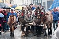 Trekpaarden met boerenkar