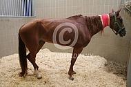 Ziek paard
