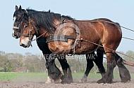 Werken met trekpaarden
