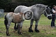 Trekpaard met veulen