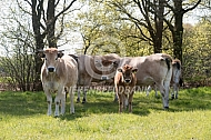 Marachine vee langs de bosrand