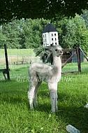 Alpaca jong
