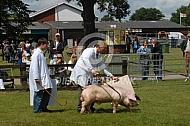 Keuring van varkens in Engeland