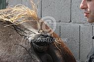 Toiletteren trekpaarden