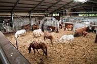 Groepshuisvesting paarden op manege
