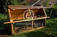 Kippen in een klein verplaatsbaar kippenhok