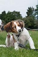 Kooiker pup met jeuk