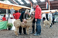 Jury aan het werk op de alpacashow