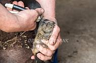 Klauwverzorging schaap
