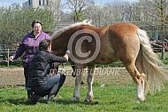 Paard onder narcose brengen