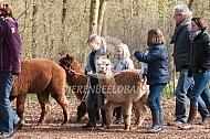 Wandelen met alpaca's