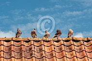 Gelderse Slenken op dakrand