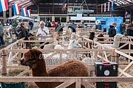 Alpacashow