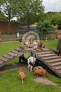 Geiten en varkens op de kinderboerderij