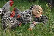 Amrock kippen