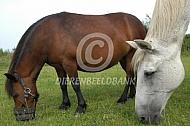 Pony met graasmasker
