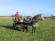 Hongaars trekpaard voor de wagen