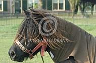 Pony met eczeemdeken