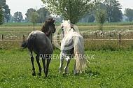 Nieuw paard in de wei