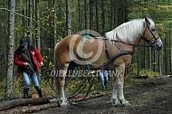 Boomslepen met Vlaams paard