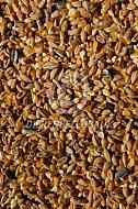 Gemengd graan(achtergrond)