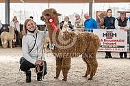 Alpaca tijdens de keuring