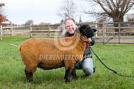 Nieuw geïmpoteerde Suffolk schaap