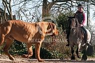 Shetlander komt hond tegen