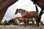 Kudde paarden op een heuvel