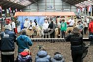 Alpacashow Hapert