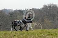 Wandeling met een ezel