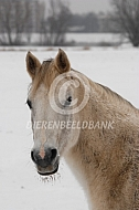 Paarden in de winter