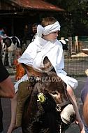 Ritje op een ezel