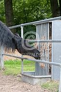 Stroruif voor paarden