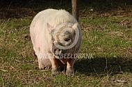 Hobbyvarken