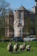 Merino schapen voor kasteel
