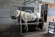 Pony in opvoelbox