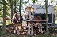 Ploegen met paarden