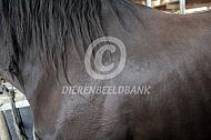 Etjes in manen van horzel  bij paard