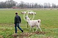Wandelen met een Lama