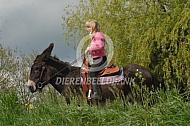 Pyreneese ezel
