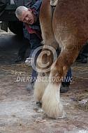 Sokken Belgisch trekpaard