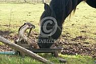 Drinkend paard (weidepomp)