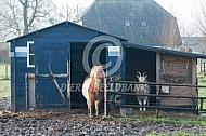 Pony en geit in hun stalletje