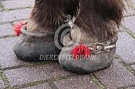 Hoefschoenen van een pony