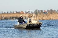 Nederlandse landgeit in een boot