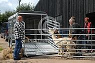Vervoer Alpaca's