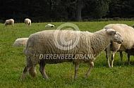 Bentheimer Landschaap