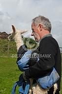Cria met alpacadekje